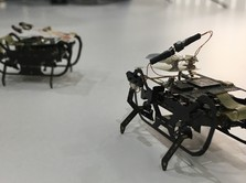 Rolls-Royce Bikin Robot 'Kecoa' Untuk Perbaiki Mesin Pesawat