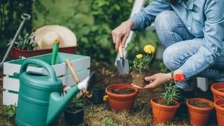 Tukang Kebun Swedia yang Bikin 'Geger' Warga Jepang