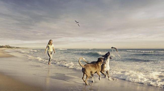 Yang Perlu Diketahui Sebelum Membawa Anjing ke Pantai