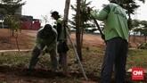 Petugas sedang memperbaiki tanaman yang mati di sekitaran area Taman Kalijodo yang diresmikan Ahok pada yang menjabat Gubernur DKI Jakarta pada 2017 silam. (CNN Indonesia/Andry Novelino)