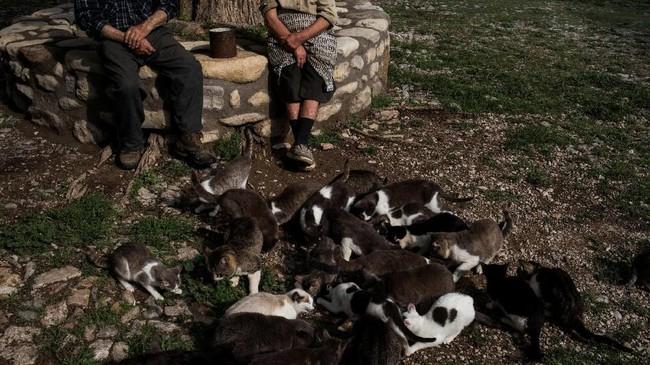 Mereka memelihara kelinci dan ayam untuk diambil daging dan telurnya, lalu pergi ke kota terdekat untuk membeli makanan lain yang dimasak di atas kompor butana atau perapian terbuka.
