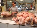 Mendag Naikkan Harga Ayam, Saham MAIN, CPIN dan JPFA Melesat