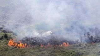 Hutan Wisata Gunung Guntur Terbakar