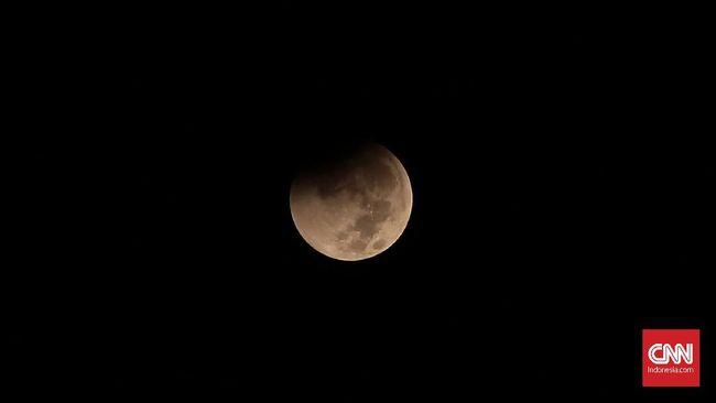 Sempat Hidup, Bibit Tanaman yang Dibawa ke Bulan Mati