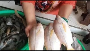 VIDEO: Gelombang Tinggi Bikin Harga Ikan Laut Melonjak
