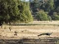Kicauan Konstruktif dari Taman Nasional Baluran