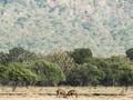 FOTO: Baluran, Nuansa Afrika di Timur Jawa