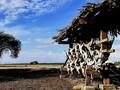 Objek Wisata Alam Favorit di Situbondo