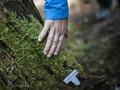FOTO: Keseruan Komunitas Lumut di Jepang
