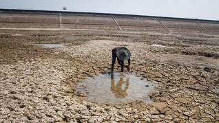 Delapan Kecamatan di Kulon Progo Dilanda Kekeringan
