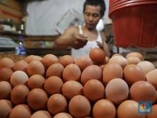Biang Kerok Inflasi Juli: Ayam dan Telur