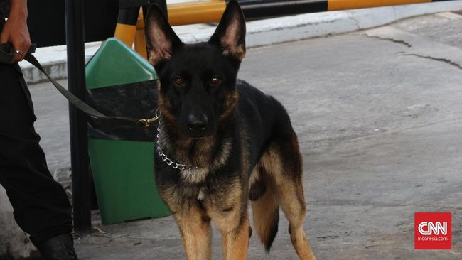 Kasus Balita Tanpa Kepala, Anjing Lacak Jejak ke Arah Parit