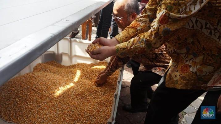 Kisruh Mendag-Buwas Terkait Impor Jagung, Ini Respons Darmin