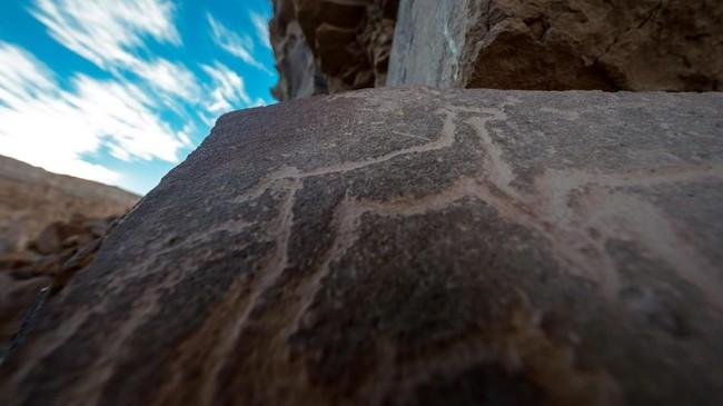 Akan tetapi, seiring dengan berjalannya waktu, tradisi yang berkaitan dengan Llama memudar. Para arkeolog meyakini tradisi keagamaan berkaitan dengan Llama telah ada sejak 18 ribu tahun lalu.(AFP PHOTO / Martin BERNETTI)
