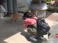 VIDEO: Wisata Desa Kucing Taiwan Utara
