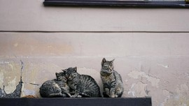 Pengasuh Kucing Liar Dipekerjakan di Rusia, Dibayar Jutaan