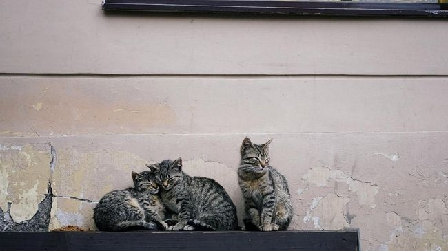 6 Penyakit Berbahaya yang Bisa Ditularkan Kucing Tak Terawat