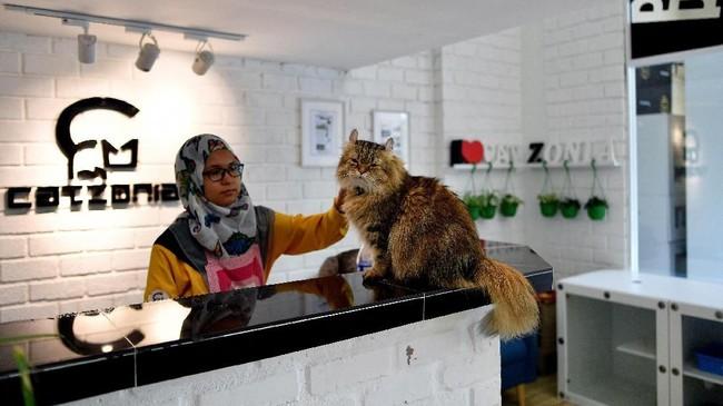 Seekor kucing sedang berada di meja lobi sebuah hotel yang diperuntukkan khusus untuk kucing, Catzonia. Hotel ini berada di Kuala Lumpur, Malaysia.