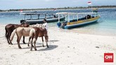 Kuda-kuda di evakuasi dari Giri Trawangan menggunakan Kapal untuk di bawa ke lombok. Para pemilik kuda membawa kuda-kuda mereka menyebrang Lombok dikarenakan sudah kesulitan mendapatkan makanan. Rabu, 7 Agustus 2018. CNN Indonesia/Andry Novelino