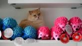 Seekor kucing persia sedang bersembunyi di sela boneka koleksi yang ada di hotel bintang lima untuk kucing.