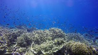 Kondisi Biota Laut Selat Pantar akan Diteliti