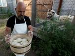 Berkah Larangan Impor Rusia, Satu Keluarga Sukses Bisnis Keju