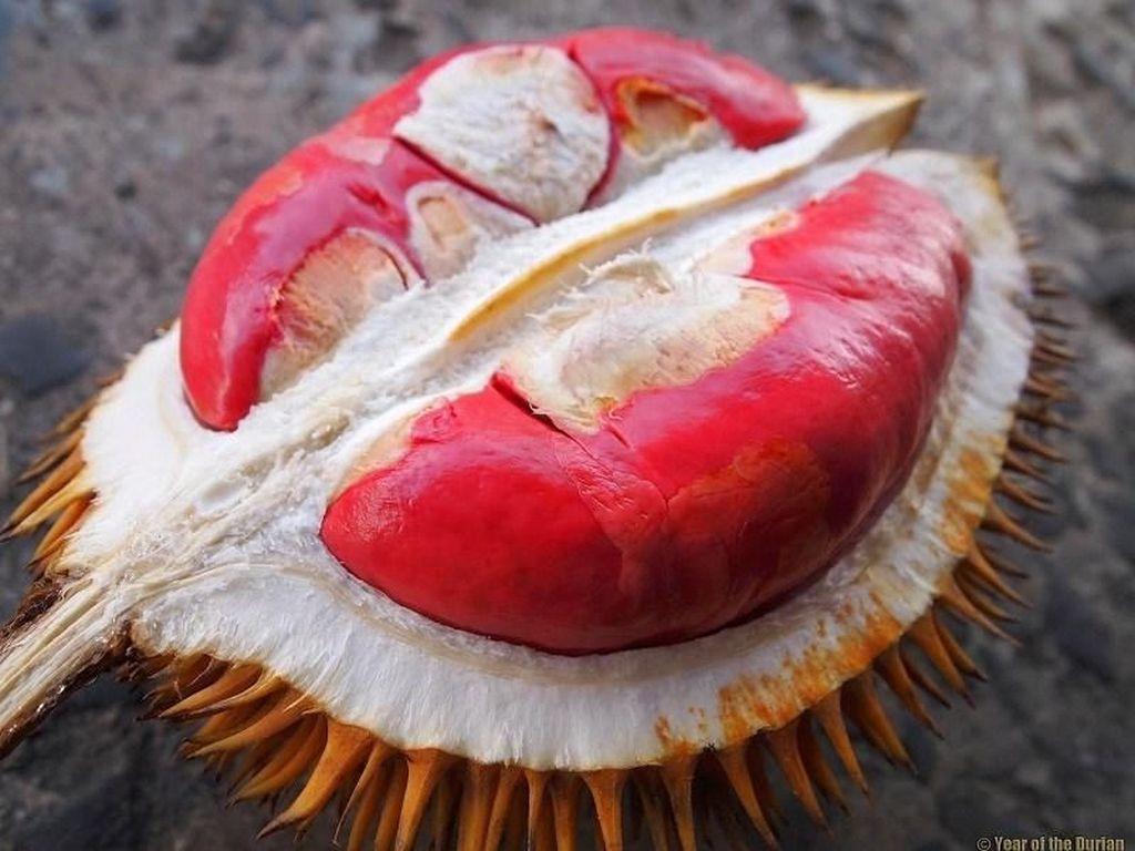 Buah Eksotis dari Pedalaman Kalimantan, Ada Durian Merah