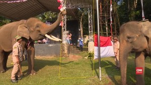 VIDEO: Kawanan Gajah Kibarkan Merah Putih di Bandar Lampung