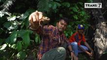 VIDEO: Rio Dewanto Menangkap Katak di Flores