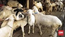 Syarat Pilih Hewan Kurban Berkualitas untuk Idul Adha