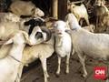 Matang Menyiapkan Dana untuk Beli Hewan Kurban