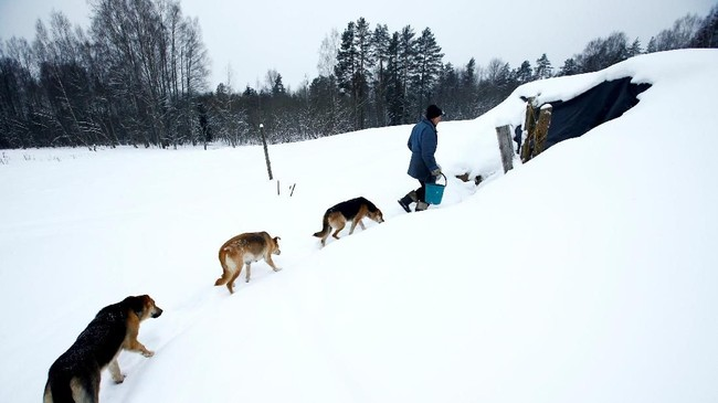 Yuri Baikov diikuti oleh anjing-anjingnya di peternakan kecilnya yang terletak di hutan dekat desa Yukhovichi, Belarusia. (REUTERS/Vasily Fedosenko)