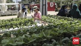 Peneliti IPB: 9.600 tumbuhan RI Teridentifikasi Tanaman Obat