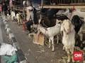 Anies Bakal Tertibkan Pedagang Hewan Kurban di Trotoar