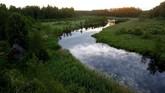 Sungai Nishcha terlihat dekat desa Yukhovichi, Belarusia. (REUTERS/Vasily Fedosenko)