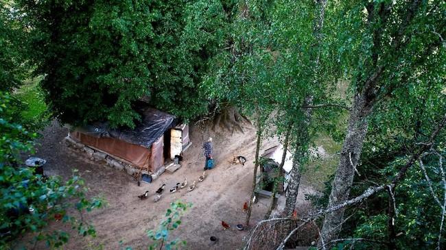 Yuri Baikov, 69, berjalan untuk memberi makan burung peliharaannya di dekat gubuknya, terletak di hutan dekat desa Yukhovichi. Mereka dulu tinggal di Yukhovichi, desa terdekat, sebagai petani. (REUTERS/Vasily Fedosenko)