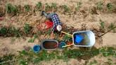Yuri Baikov menanam tomat di ladangnya yang kecil, terletak di hutan dekat desa Yukhovichi, Belarusia. Yuri dan istrinya telah tinggal selama lebih dari seperempat abad di sebuah pondok primitif di hutan. (REUTERS/Vasily Fedosenko)