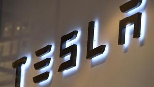 Bangun Pabrik di Hutan, Tesla Pindahkan Semut Pakai Sekop