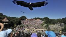Taman Bermain Pekerjakan Burung sebagai Pemungut Sampah