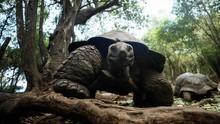 Cangkang Kura-kura Seukuran Mobil Ditemukan di Amerika
