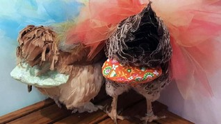 Tren Ayam Jadi Peliharaan, Wanita AS Ciptakan Popok Ayam