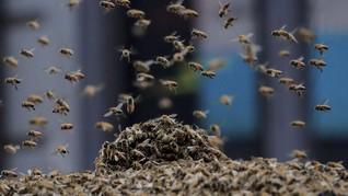 FOTO: Kawanan Lebah Serbu Times Square New York