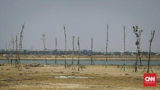 Kisruh Tanah Rorotan: Bermula di Ahok, Panas di Era Anies