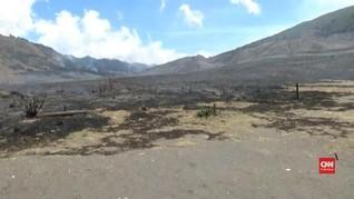 VIDEO: Kebakaran di Kawasan Wisata Gunung Bromo