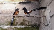Burung di Indonesia Semakin Beragam