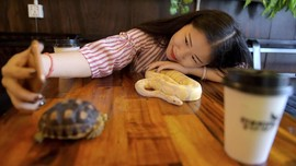 FOTO: Kafe Reptil di Kamboja