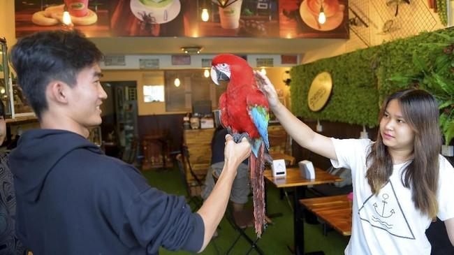 Namun di kafe ini tak hanya 'menyediakan' reptil, karena ada juga hewan yang ramah seperti burung paruh bengkok.