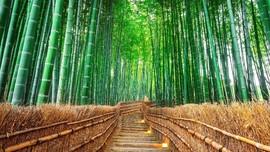 Kyoto Luncurkan Promosi Wisata 'Sepi Turis, Mari Datang'