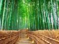 Tak Cuma Tokyo, Ada Belasan Destinasi Unik di Jepang