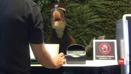 VIDEO: Hotel di Jepang dengan Pelayan 'Dinosaurus'